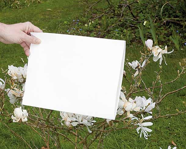 bilanciamento del bianco manuale