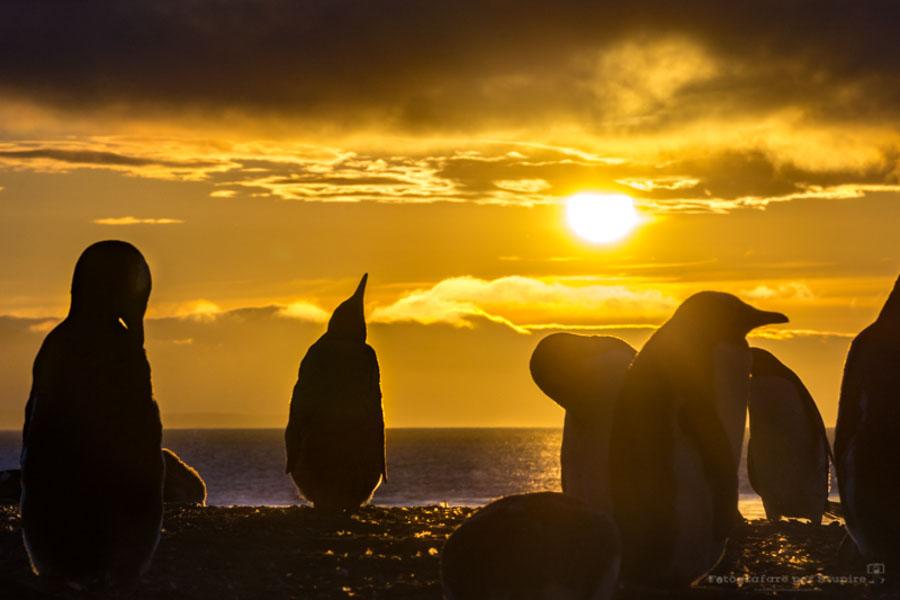 fotografare al tramonto falkland
