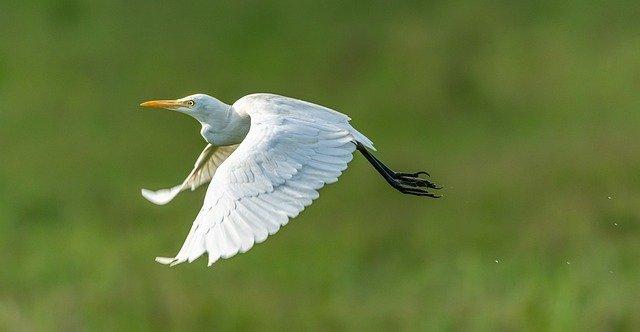 come fotografare uccelli in volo