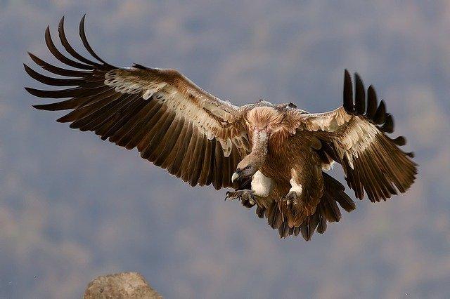 fotografare uccelli pdf